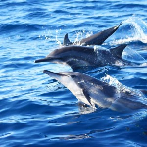 bohol-dolphin-watching-tours